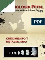 Fisiología fetal