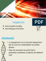 Lipogenesis.pptx