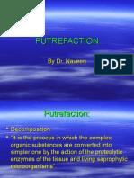04 Putrefaction