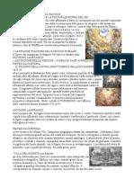 ARTE-NEL-TEMPO-DEI-VECCHI-CERCARI-secondo Volume, da, gotico internazionale al rococò