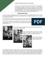 La Anatomia y Biomecanica de La Carrera