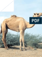 Antimicrobial Activity and Antibiotic Resistance of LAB Isolated From Sudanese Traditional Fermented Camel (Camelus Dromedarius) Milk Gariss