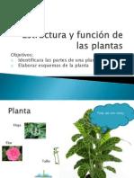 Estructura y función de las plantas examen