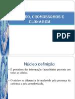 Núcleo, Cromossomos e Clonagem