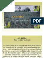 Cultivo de La Sabila