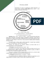 diviz_celular.pdf