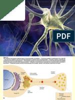Sinapsis Fisl 104