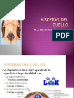 visceras-del-cuello-1222495594535357-8(1)