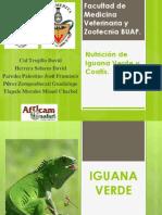 Nutrición de Iguana Verde y Coatis