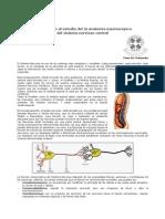 Neuroanatomia ufro