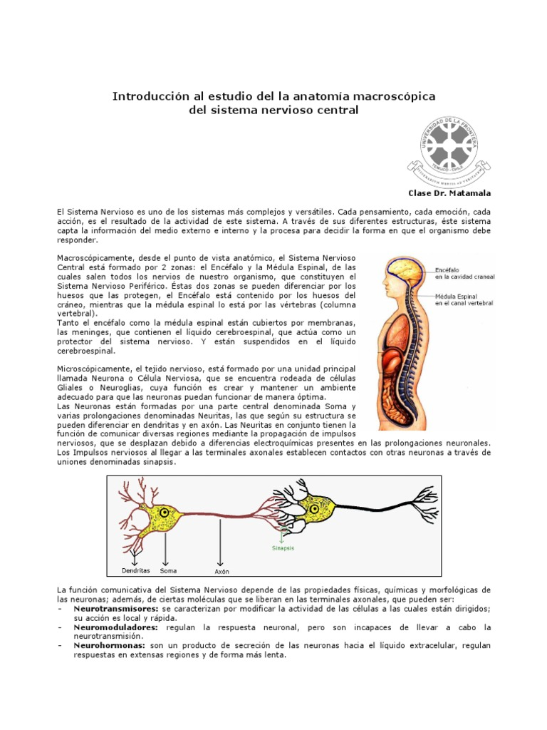 Encantador Hoja De Examen 12 Anatomía Macroscópica Del Sistema ...