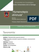 Hymenolepis diminuta