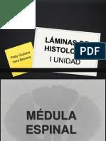 LAMINAS DE HISTOLOGÍA - I UNIDAD