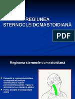 Curs 11 Regiunea Sternocleidomastoidian