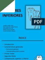 MOLARES INFERIORES