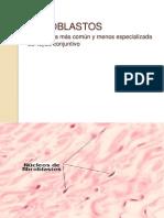 Fibroblast Os