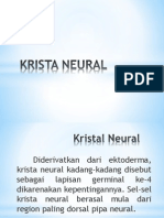 Krista Neural