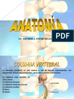 Anatomia Huesos Columna