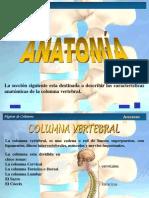 Anatomia Columna Vertebral