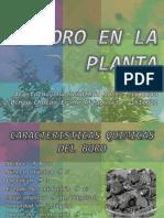 EL BORO 2