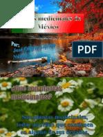 Plantas medicinales de México