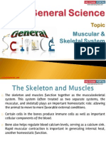 30(C) Muscular and Skeletal System