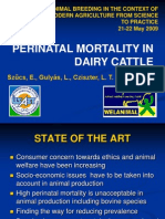 Perinatal Mortality in Dairy Cattle