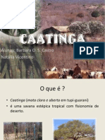 Caatinga (1)