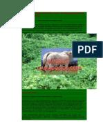 Kudzu Alimento Proteico Para Ganados