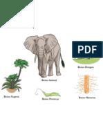 Comprensión de los reinos de la naturaleza por medio de actividades lúdico-didácticas apoyadas en herramientas de la Tecnología y la Comunicación (TIC's)