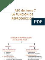 REPASO UD 7º REPRODUCCIÓN PPT