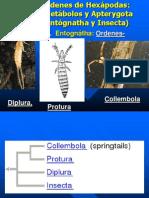 Chapter 17 Ametabolos and Ephemeroptera