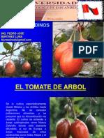 Cultivos Andinos Clase 16 Tomate Del Arbol