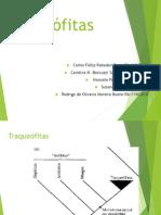 Apresentação Bio vegetal -Pteridófitas(final)