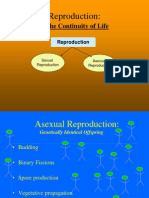 Asexual v Sexual Reproduction(5)