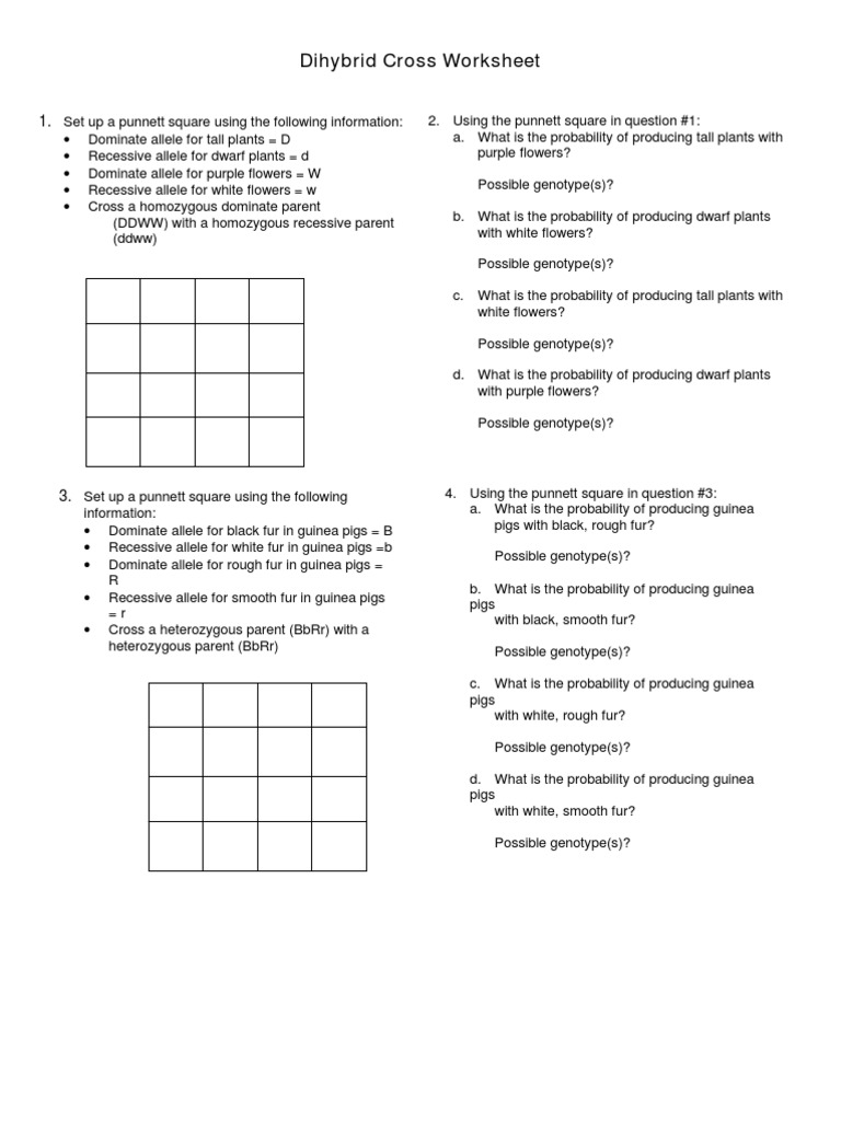 Worksheets Dihybrid Punnett Square Worksheet dihybrid cross practice zygosity genotype