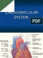 Cardiovascular - Heart
