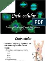 CLASE 12- CICLO CELUALR - nucleo celular.pptx|