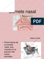 Cornete Nasal