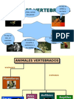 Animales Vertebra Dos 03