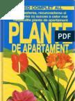 Plante de Apartament Gata