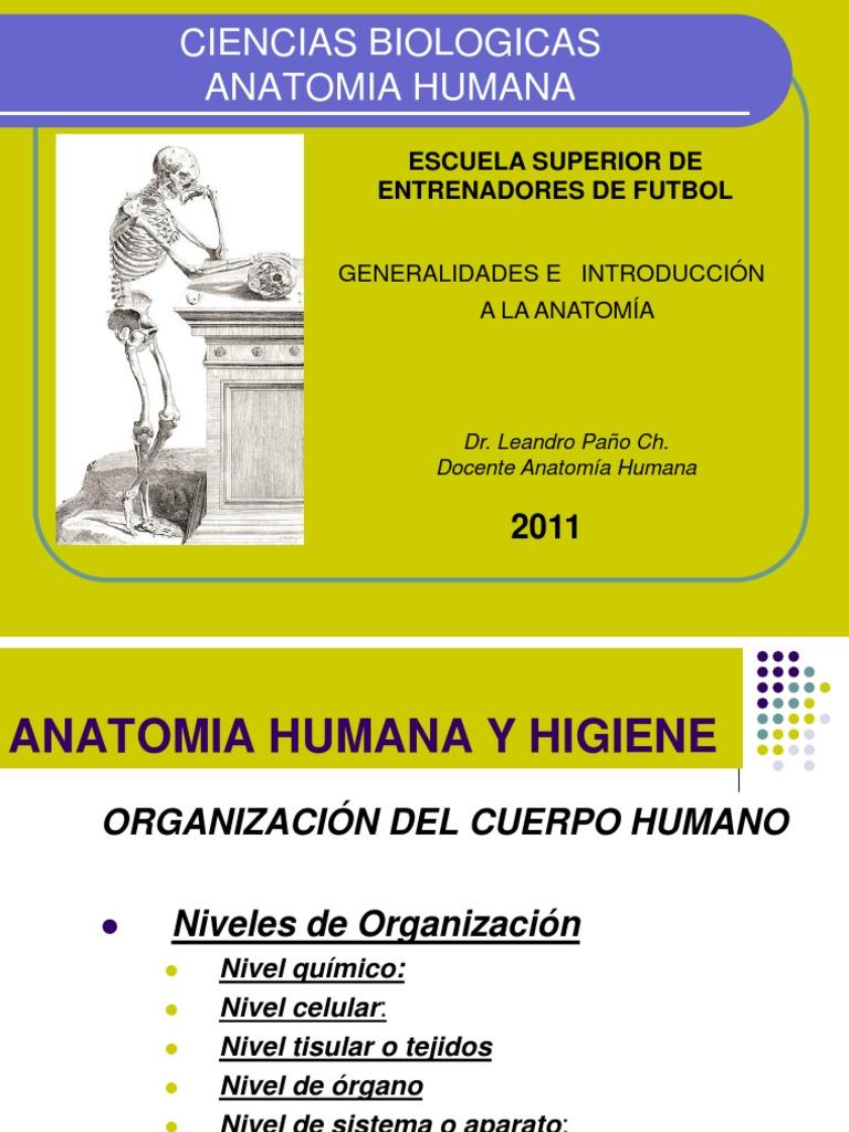 Anatomía introducción