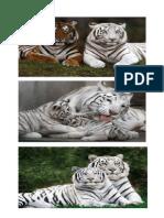 Los Hombres de Tigre de Piedra
