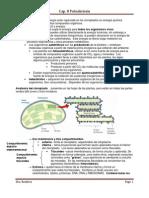 Resumen Cap. 8 Fotosintesis