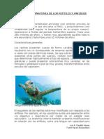Anatomia y Morfologia de Reptiles y Anfibios