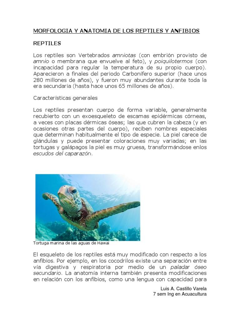 Atractivo Anatomía De Una Tortuga Marina Molde - Anatomía de Las ...