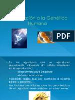 Genetica Humana (2)