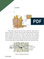 Histologi Tulang Dan Sendi