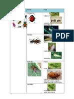Insectos beneficiosos