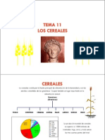 Tema 11. Los Cereales